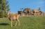 Lane Ranch North Entire Parcel, Sun Valley, ID 83353