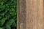 Meranti tropical hardwood detail