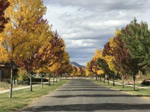 Beautiful tree lined streets