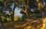 Oak Wonderland, with View