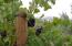 1556 La Vista Rd, SANTA BARBARA, CA 93110