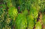 Lush drought-tolerant landscaping