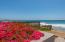 Bougainvillea and Beach Breezes... Fantastic combination!