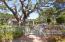 Beautiful Mature Oak Trees