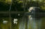 Resident Swans - Jim Bartsch