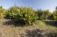 Cherimoya & Avocado Orchard