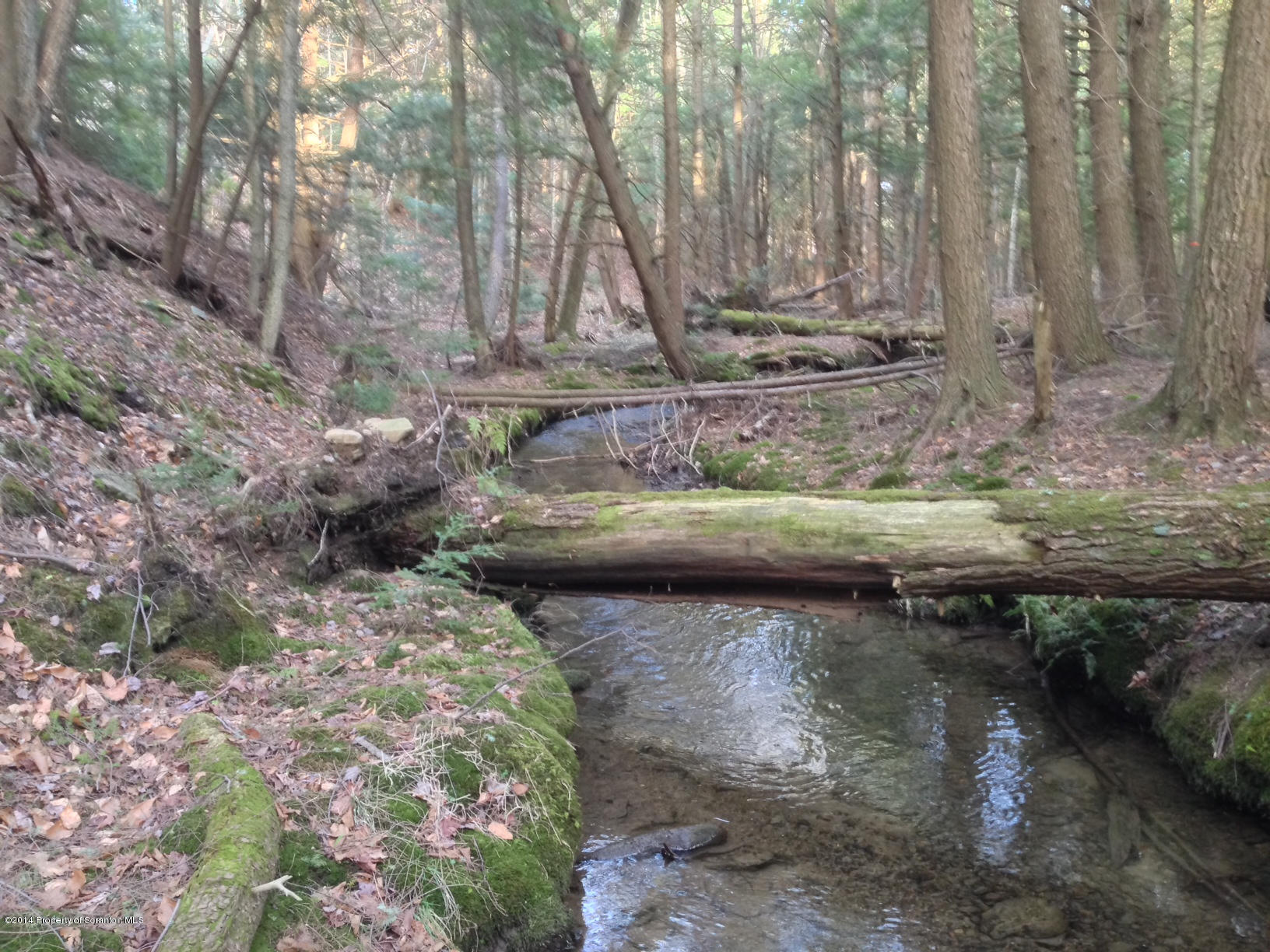 8 ASH GAP RD, Spring Brook Twp, Pennsylvania 18444, ,Land,For Sale,ASH GAP,14-430
