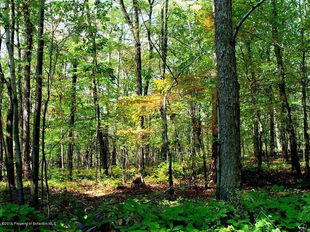SR 1009 Starrucca Creek Rd, Susquehanna, Pennsylvania 18847, ,Land,For Sale,SR 1009 Starrucca Creek Rd,15-3911