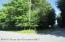 Corner. Blue Spruce & Hemlock