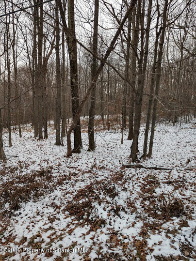 21 Marys Ln, Spring Brook Twp, Pennsylvania 18444, ,Land,For Sale,Marys,19-5388