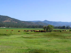 The Cloud Rim Ranch in the beautiful Scott Valley - Fort Jones, CA