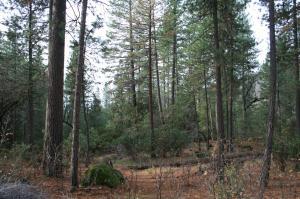 #04,4.79 ac Christy Creek Lane, Shingletown, CA 96088