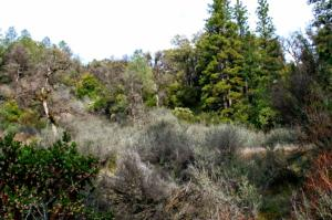 #02, 5.29 Ac Christy Creek Ln, Shingletown, CA 96088
