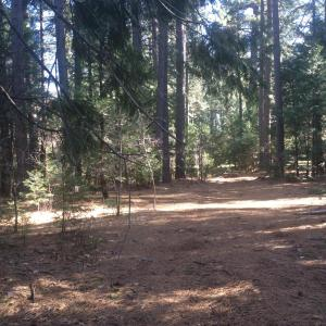 Lot18 LAKE MCCUMBER RD, SHINGLETOWN, CA 96088