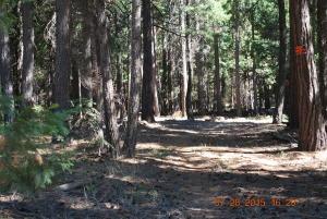 # 8 Westward Ho, Shingletown, CA 96088
