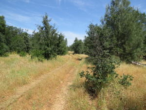 Old Happy Valley Rd, Cottonwood, CA 96022