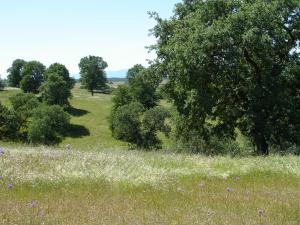 Lot #58 Pimlico Court, Cottonwood, CA 96022