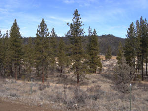 County Rd. 85, Lookout, CA 96054