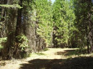 1.89 acre Emigrant Trail, Shingletown, CA 96088