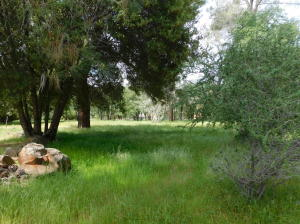 Lot 19 Wilson Hill Rd, Shingletown, CA 96088
