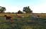 Irrigated Pastures