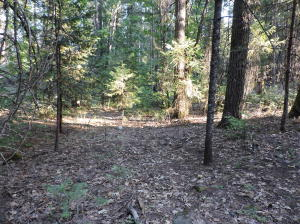 Bridger Way, Oak Run, CA 96069