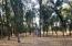 Flat Buildable Land with Trees and Semi-Private Lot