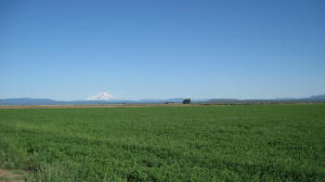 Alfalfa and view to Mt Shasta