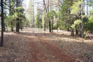 5.02 Acres Whitmore Rd, Whitmore, Ca 96096