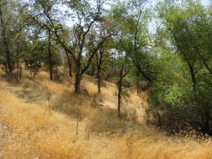 5 acres Squaw Grass Trail, Redding, CA 96003