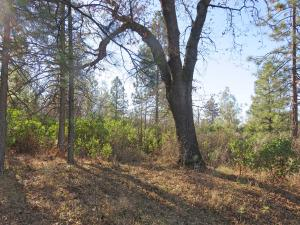 6.28 acres Highway 44, Shingletown, CA 96088