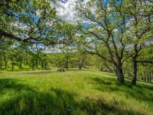 Rolling Oaks Lot 33, Cottonwood, CA 96022