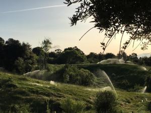 Water Rights - gravity flow sprinklers