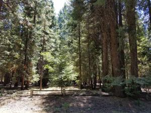 Lot # 8 Redwood Drive, Shingletown, CA 96088
