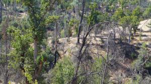 20+- Acres Off Lower Coal Pit Rd, Igo, CA 96047