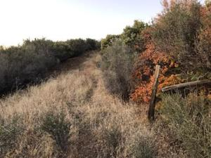 Terry Mill Rd, Round Mountain, CA 96084