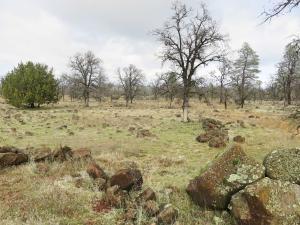 42 acres Buffalo Drive, Anderson, CA 96007