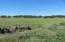 61 Acres Millville Plains Rd, Millville, CA 96062