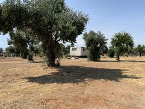 5524 Mary Gold Ln, Anderson, CA 96007
