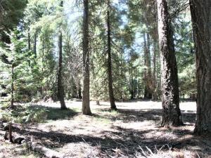 #26 Amber Way, Shingletown, CA 96088