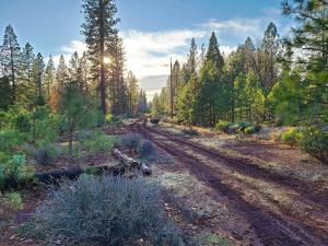 119 acres Whitmore Road, Whitmore, CA 96096