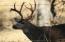 Great deer population with tremendous habitat