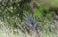 04-24-21 Wild Turkey goobler