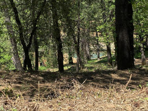 2 residential lots Forest Road, Lakehead, CA 96051