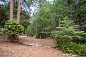 Dogwood Cir, Shingletown, CA 96088