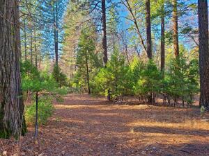 15 acres Whitmore Road, Whitmore, CA 96096