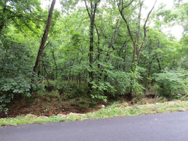 Peck Hollow Road Rogersville, MO 65742