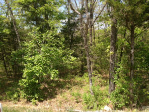 163 Pinehurst Drive, Branson, MO 65616