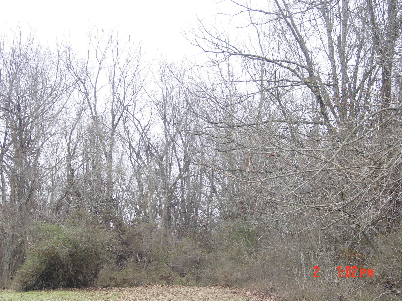 Lot 11, 12 Oak Grove Addition Crane, MO 65633