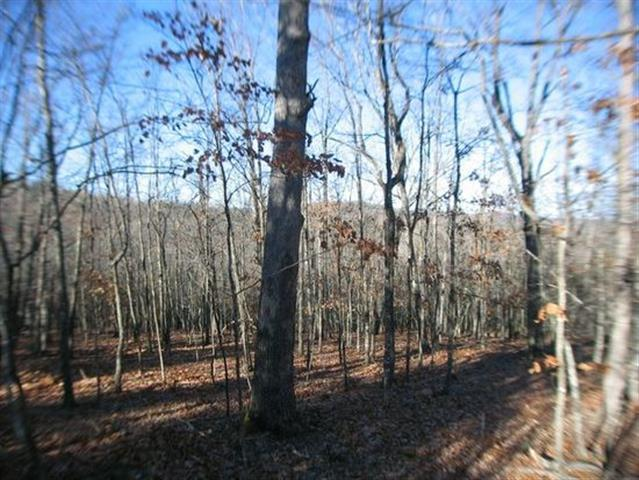 11 Acres Pine Top Road Hollister, MO 65672